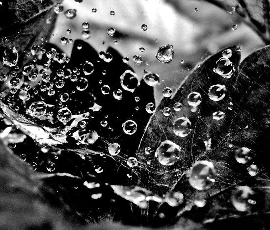 Dancing Water Drops by Mojca Savicki