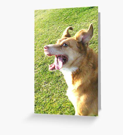 Ear Ear Greeting Card