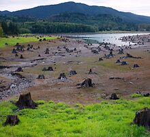 Dead Cut Stumps in Riverbed by Stacey Lynn Payne