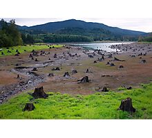 Dead Cut Stumps in Riverbed Photographic Print
