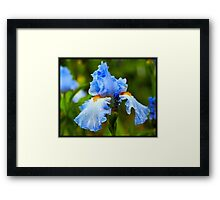 Beautiful Blue Iris Framed Print