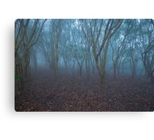 FOGGY FOREST MORNING Canvas Print