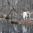 Dog Watcher by pics4me