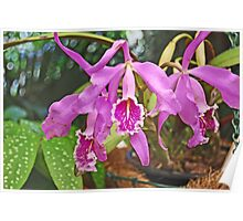 Orchid #13 Poster