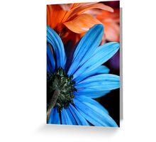 Blue & Orange Daisies Greeting Card