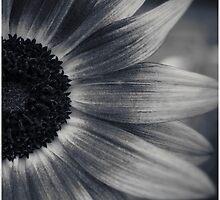 Glen Echo Flower by Sean Napier