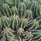 cactus garden II by elisabeth tainsh