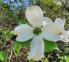 Spring Flower-9 by WarfareFX