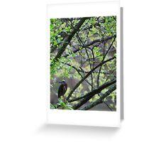 Striking bird sitting peacefully Greeting Card