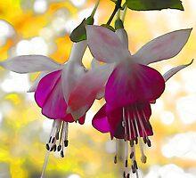 Pink Fuchsia by T.J. Martin