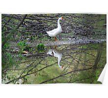 Natures mirror at Echo Lake Poster