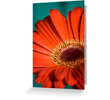 Red Gerbera I Greeting Card