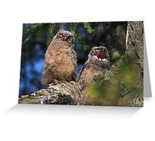 Owlet Siesta Greeting Card