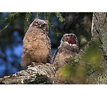 Owlet Siesta Photographic Print