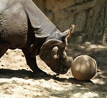 Rhino soccer, anybody? by Kenric A. Prescott