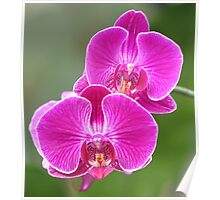 World of Orchids Plate # 2 Poster