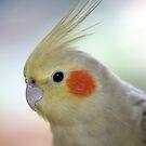 Kiwi - pet cockatiel by Jenny Dean