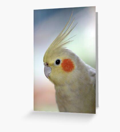 Kiwi - pet cockatiel Greeting Card