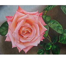 Satin pink rose Photographic Print