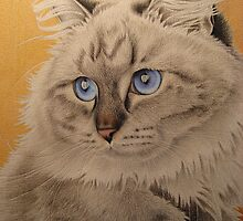 Baby blue eyes by lanadi