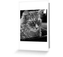 Elvin allows a rare closeup Greeting Card