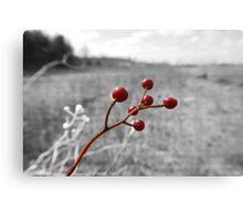 Ripe Berries Canvas Print