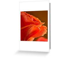 Raindrops on Salmon Rose Greeting Card