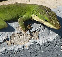 Anole Soaking Up the Heat in TN by JeffeeArt4u