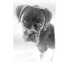 They Tell Me I'm Not Longer A Puppy - Boxer Dogs Series Poster