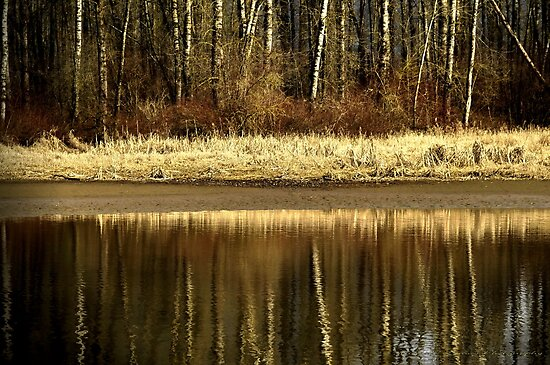 Golden Reflections by Annie Lemay  Photography