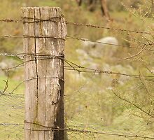 Fence Post by Shane Field