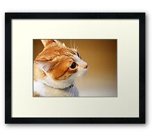 Another treat please? Framed Print