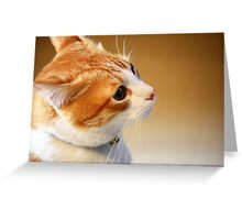 Another treat please? Greeting Card