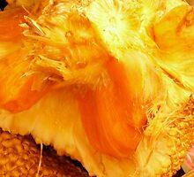 an orange? by D. D.AMO
