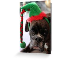 You've Got To Be Kidding! - Boxer Dogs Series Greeting Card