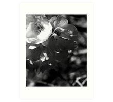 fragmentary blossom II Art Print