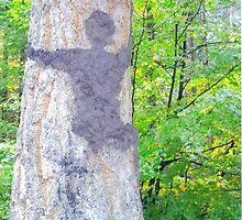 The Tree Hugger. by Carla Maloco