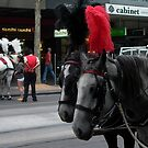 carriage horses by BronReid