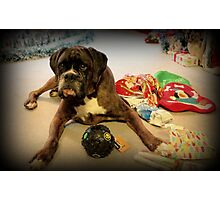 Is That Another Christmas Present For Me ?  - Boxer Dogs Series Photographic Print