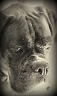 Waiting For My Treat - Boxer Dogs Series by Evita