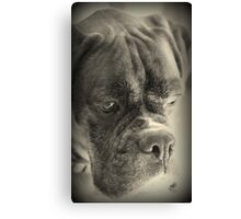 Waiting For My Treat Canvas Print