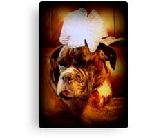 Boxer Dog With Blue Bow Canvas Print