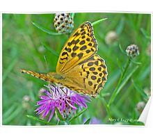 Silver-washed Fritillary, Argynnis paphia Poster