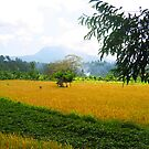 Field in Bali by Christine Wilson