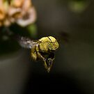 The Flight of the Bumble Bee by Selsong