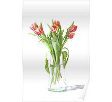 Tulips in Vase Poster