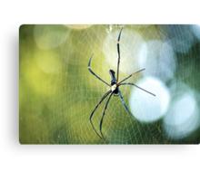 Boris the spider Canvas Print