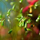 Moss by Ann  Palframan