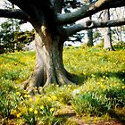 Tree in a Forest Surrounded by Wild Flowers by yiuphotography