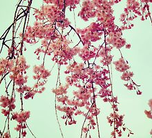 Cherry Blossoms from Queens Botanical Garden by yiuphotography
